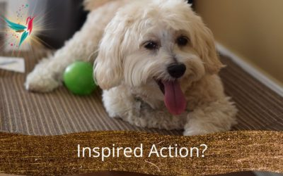 The space of inspired action – why would you take inspired action?